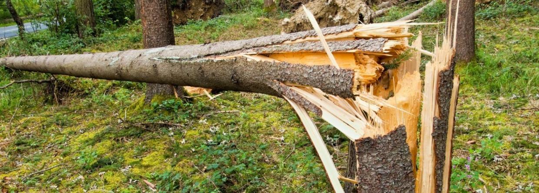 Omgevallen boom door storm